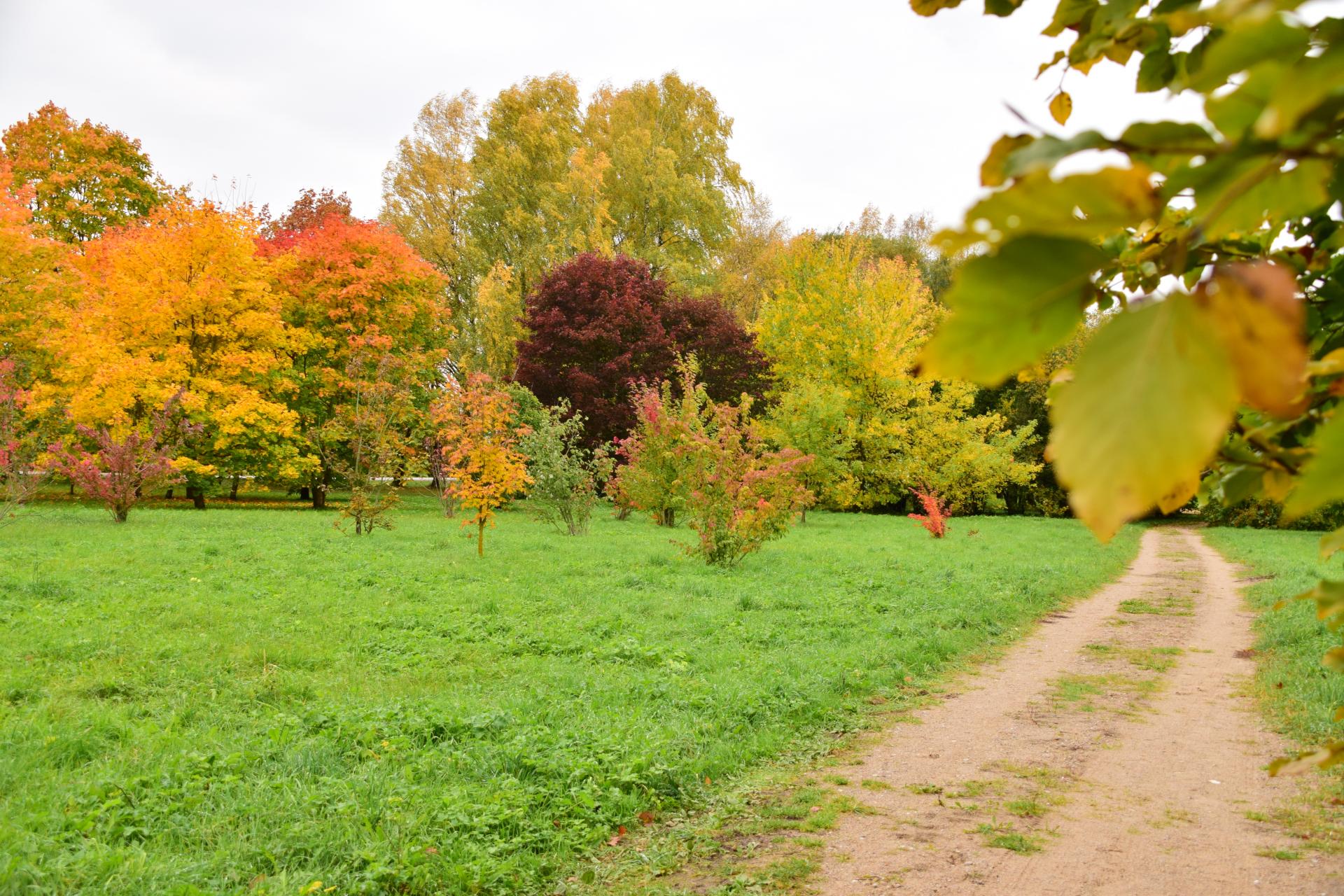 Dubravos arboretumas R.Mikitiejvos nuotr.